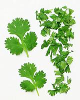 Coriander leaves have several beneficial properties due to which they are used in several recipes