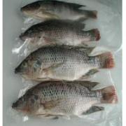 Tilapia fish are good for fillet