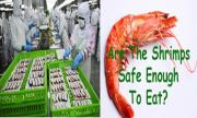 feces fed Asian shrimps in USA