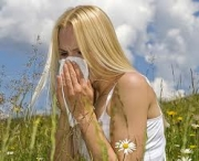 Herbal remedies for hay fever