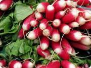Radish Medicinal Uses -- Radishes