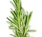 Several side effects of rosemary are associated with its excessive intake