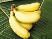 Bananas Nutrition and Using