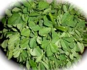 Fenugreek leaves and seeds have many health benefits and is therefore a good addition to every meal