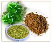 Fenugreek can be consumed in fresh or dried form - Herbs that enhance lactation