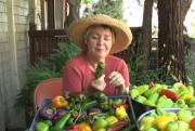 All About Sweet Peppers