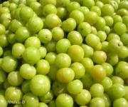 Amla Medicinal Uses -- Indian Gooseberry