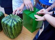 Square Watermelons!