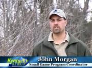 Quail Habitat In Kentucky - An Overview