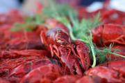 Swedish Crayfish