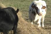 Tour Of Farm Sanctuary
