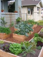 Learn The Basics Of Growing An Edible Garden At Home