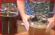 Grow your own Kombucha Scoby