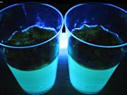 How To Make Glow in the Dark Jelly