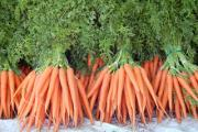 Carrots could be helpful in reducing the risk of Type 2 Diabetes
