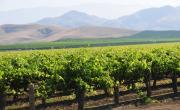 The productive Burgundy vineyards