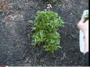 Betty's Herb Garden Update