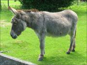 Milk from donkey has several nutrients