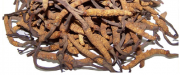 Cordyceps is a kind of fungus associated with numerous health benefits