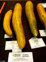 World Record: Giant Vegetables