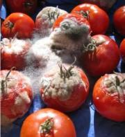 Tips To Identify Rotten Tomatoes