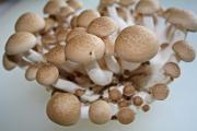 tips for gifting mushroom