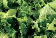 Kale Salad- Part 1: Introduction