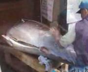 Cutting Tuna Fish