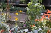 Tips to Planting an Herb Garden