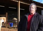 Alpacas Farming