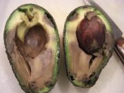 Is this avocado safe to eat? - Chowhound