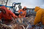 Gulf Coast seafood industry