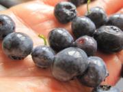 Health Effects of eating rotten blueberries