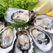 Raw, uncooked oysters are considered to be one of the world's popular delicacies.