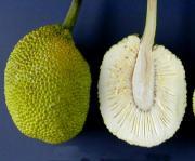 Breadfruit Soup Guadeloupe