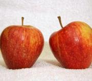 Side effects of apple are not due to the fruit but its seed and over consumption
