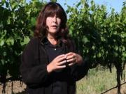 How Grapevines Bloom and Fruit Develops: Flowering Plants at Jordan Vineyard & Winery