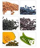 storing-seeds