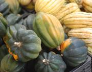 Winter squashes are power houses of vitamins and other vital nutrients.