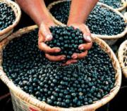 Acai Berries Is a great super food