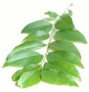 Curry Leaves Medicinal Uses -- Curry Leaves