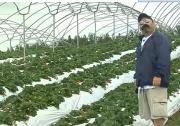 Kula Country Strawberries Farm Review