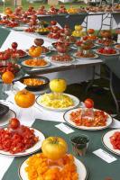 TOMATO FEST 2007