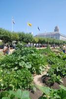 About Slow Food Nation's Victory Garden