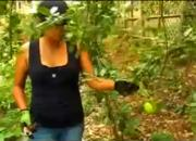 Harvesting In Patti Moreno'S Garden