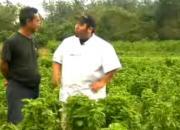 Fresh Basil Farms: A Review