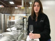 Tasting Newborn Wines during Harvest: From Crushpad to Tank