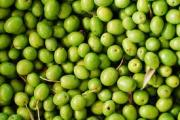 Olive Medicinal Uses -- Green Olives
