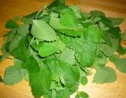 Lemon balm - herbal remedy for cold sore
