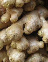 Tips to store ginger root